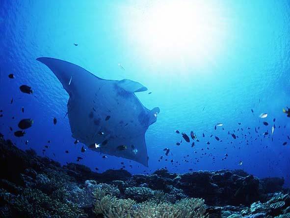 ナショナルジオグラフィック 水中写真