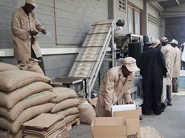 ケニア産珈琲豆の出荷