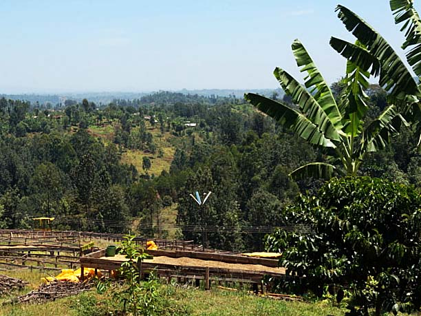 キアンヤンギプランテーション珈琲農園
