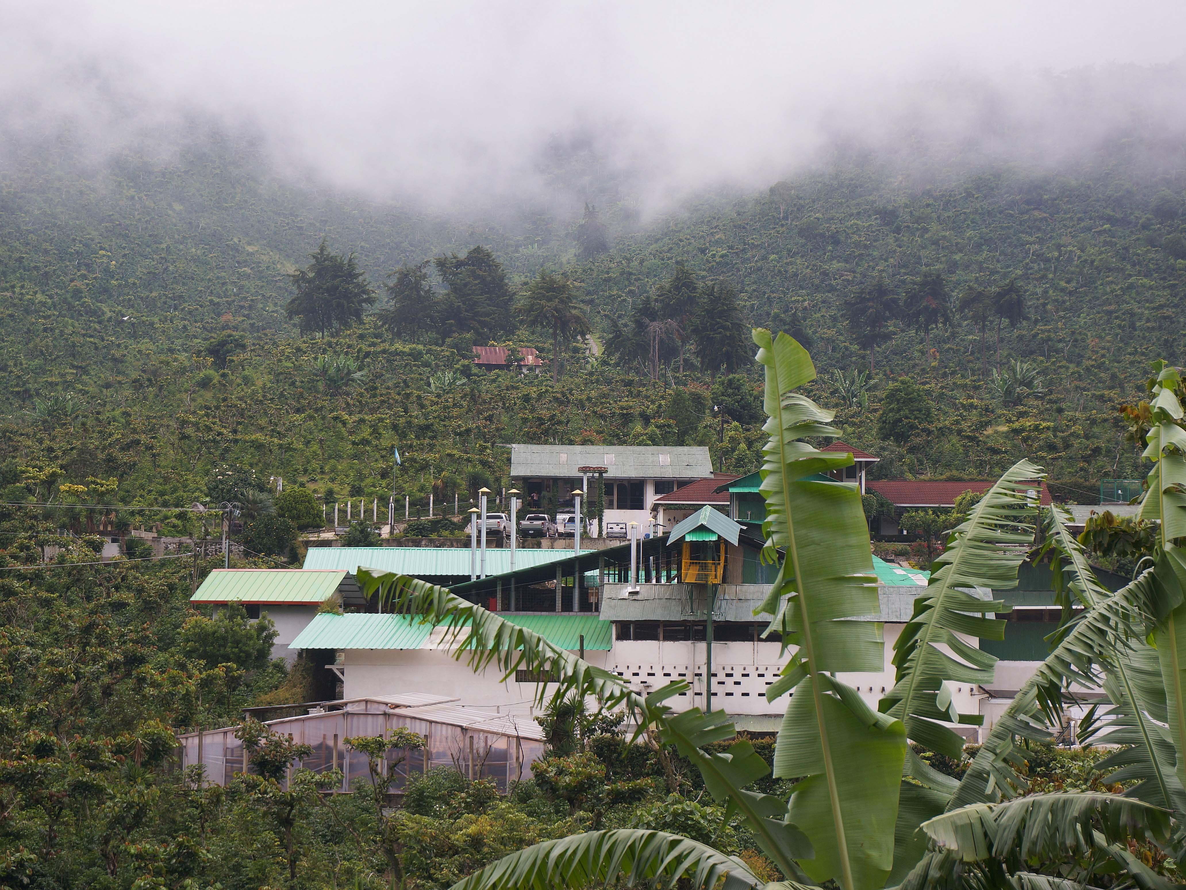霧の中に浮かぶ エルインヘルトコーヒー農園